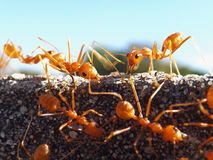 Unity ant workers. Ant workers with blue horizon Stock Image