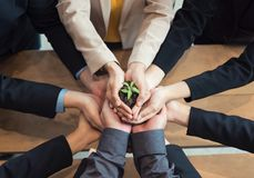Unity of businesspeople protecting small sprout with hands royalty free stock photography