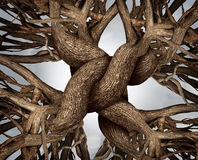 Unity Symbol. As an eternal knot of trust made from the roots and trunks of growing trees as a community or business friendship concept for the power of Royalty Free Stock Image