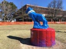 Univercity kettering del perro de Bull imagen de archivo