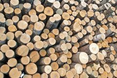 Birch logs on the logging. The universal abstract composition for the background stock photos