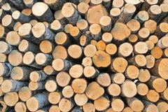 Birch logs on the logging. The universal abstract composition for the background royalty free stock image