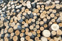 Birch logs on the logging. The universal abstract composition for the background royalty free stock photography