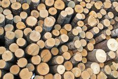 Birch logs on the logging. The universal abstract composition for the background royalty free stock photo