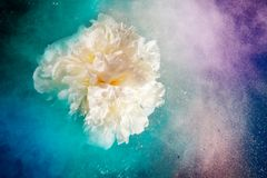 Universe like flowers Stock Photo