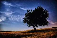 Universe and tree. The universe over the night landscape Royalty Free Stock Photos