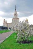 Universidad de estado de Moscú Manzano Floreciente imagen de archivo libre de regalías