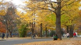 Universidad de Hokkaido en la temporada de otoño almacen de video