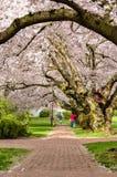 Universidad del campus de Washington Fotos de archivo