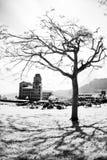 Universidade bonita em Formosa Imagens de Stock