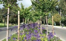 Universidade da California Flor-enchida no número médio de Berkeley Fotografia de Stock Royalty Free
