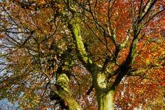 Universidade das árvores Imagens de Stock Royalty Free