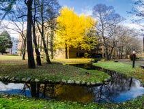 Universidade do Hokkaido em Autumn Season Imagem de Stock