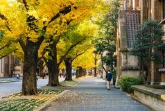 A universidade do Tóquio, Japão Foto de Stock Royalty Free