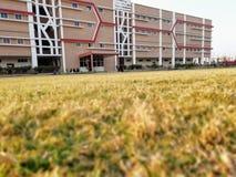 Università di Medi-CAPS fotografia stock libera da diritti