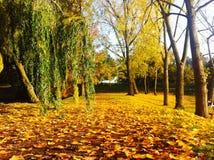 Università di parco di Essex Fotografia Stock