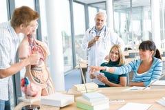 Universität - Kursteilnehmer mit anatomischem Baumuster lizenzfreie stockfotografie