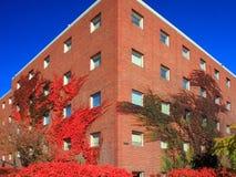 Universität von Minnesota Stockfotos