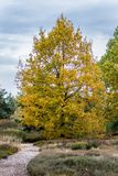 Université de jardin botanique de lande de Bayreuth photographie stock libre de droits