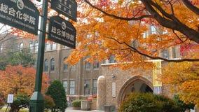 Université du Hokkaido à l'automne clips vidéos