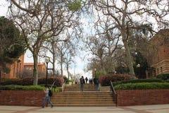 Universiteit van de Studentengang van Californië Los Angeles UCLA op de campus Stock Afbeelding