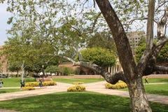 Universiteit van de Studentengang van Californië Los Angeles UCLA op de campus Royalty-vrije Stock Afbeelding