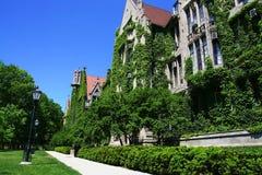 Universitet av Chicago på sommar, IL royaltyfria bilder
