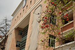 universitetar Royaltyfri Foto