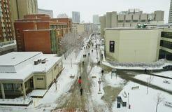 Universitetsområdet av universitetet av Ottawa, Kanada Fotografering för Bildbyråer