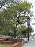 The University Avenue at Gainesville, Fl royalty free stock image