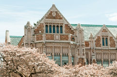 University Building and Cherry Blossoms. Close up detail of the collegiate gothic style Smith Hall building with cherry trees on the Liberal Arts quad of the Royalty Free Stock Photography