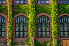 Free University Building Covered With Ivy Stock Photos - 73151923