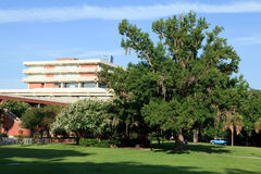 University Campus. Early morning view of a university campus with green lawn, trees and education building stock image