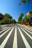 University Campus Cross Walk. Portrait image of a university campus intersection cross walk on a clear blue sky day with a long line of palm trees lining the royalty free stock photography