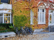 University campus in fall Royalty Free Stock Photography