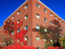 University of Minnesota Stock Photos