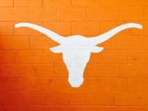 University of Texas Longhorn in Burnt Orange. Painted on brick wall Stock Photo
