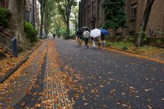 University of Tokyo with falling leaf in autumn. Footpath with falling autumn leaf and students background at University of Tokyo, Japan. Here, called Todai, is stock photography