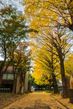 The University of Tokyo Stock Photography