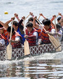 University of Toronto's Victoria College. Paddling Club Dragon Boat racing at the21st TELUS Toronto International Dragon Boat Racing Festival at Toronto Island Stock Images