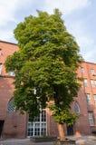 University Tree in garden Stock Image