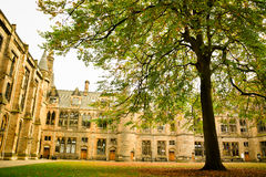 University tree Royalty Free Stock Photos