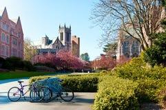 University of Washigton, blue bicycles. Spring in University of Washigton, blue bicycles Stock Photography