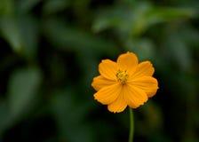 Universo arancio Fotografia Stock