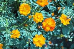 Universo arancio Fotografia Stock Libera da Diritti