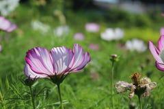 Universo del fiore Fotografia Stock