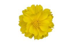 Universo dello Isolare-zolfo, universo giallo fotografie stock libere da diritti