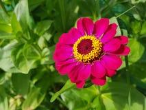Universo di rosa della primavera immagine stock libera da diritti