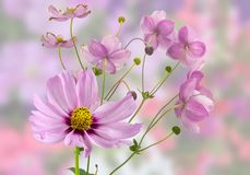 Universo rosa meraviglioso fotografia stock