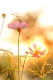 Universo rosa sul campo nel tramonto immagini stock libere da diritti